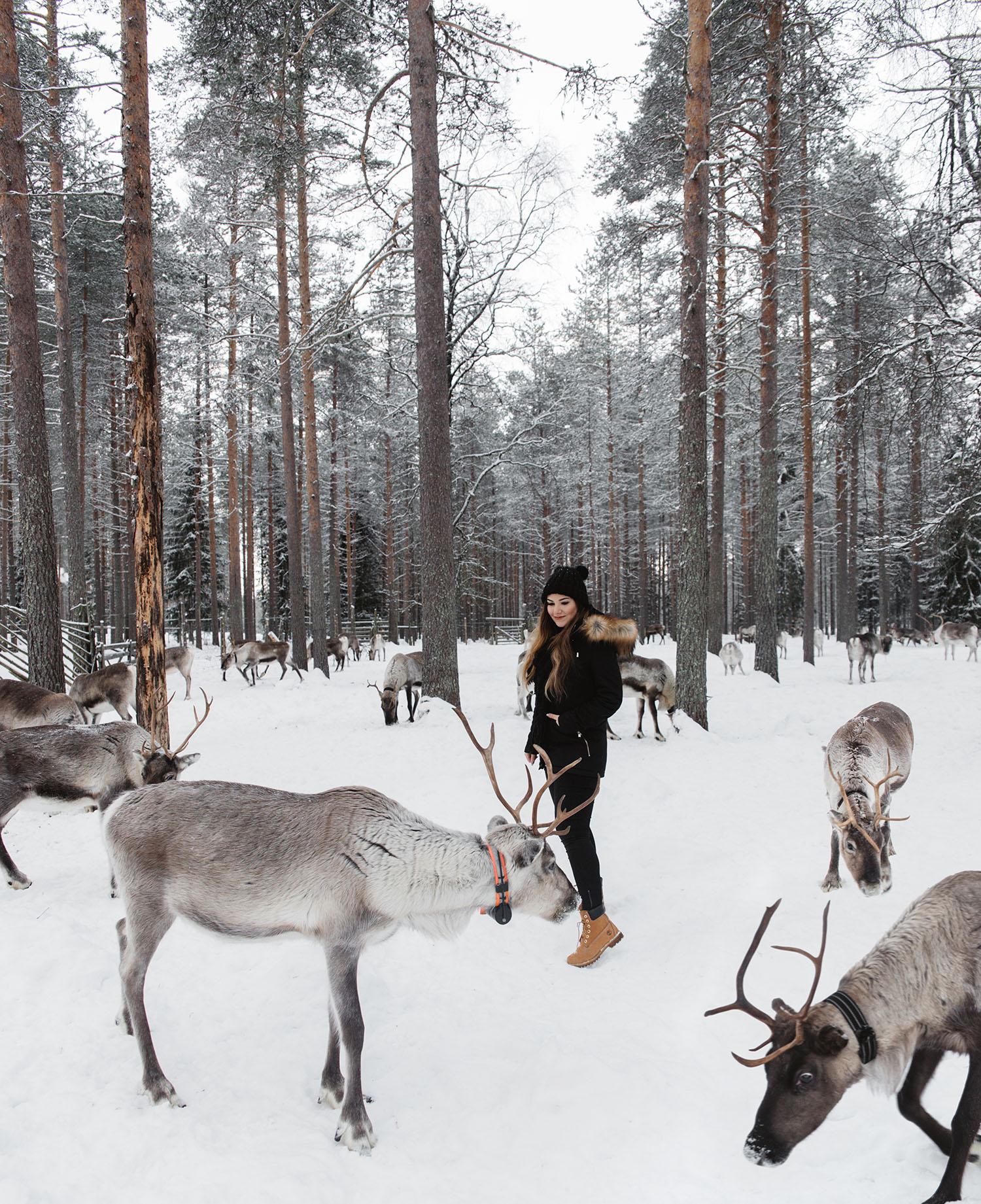 Poro Panuma Reindeer Farm