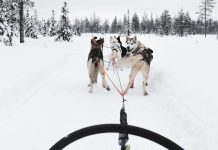 Husky Safari - Things to do in Oulu / Saker att göra i Uleåborg