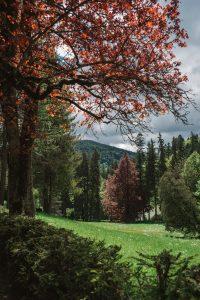 Stunning scenery at Peleş Castle in Romania