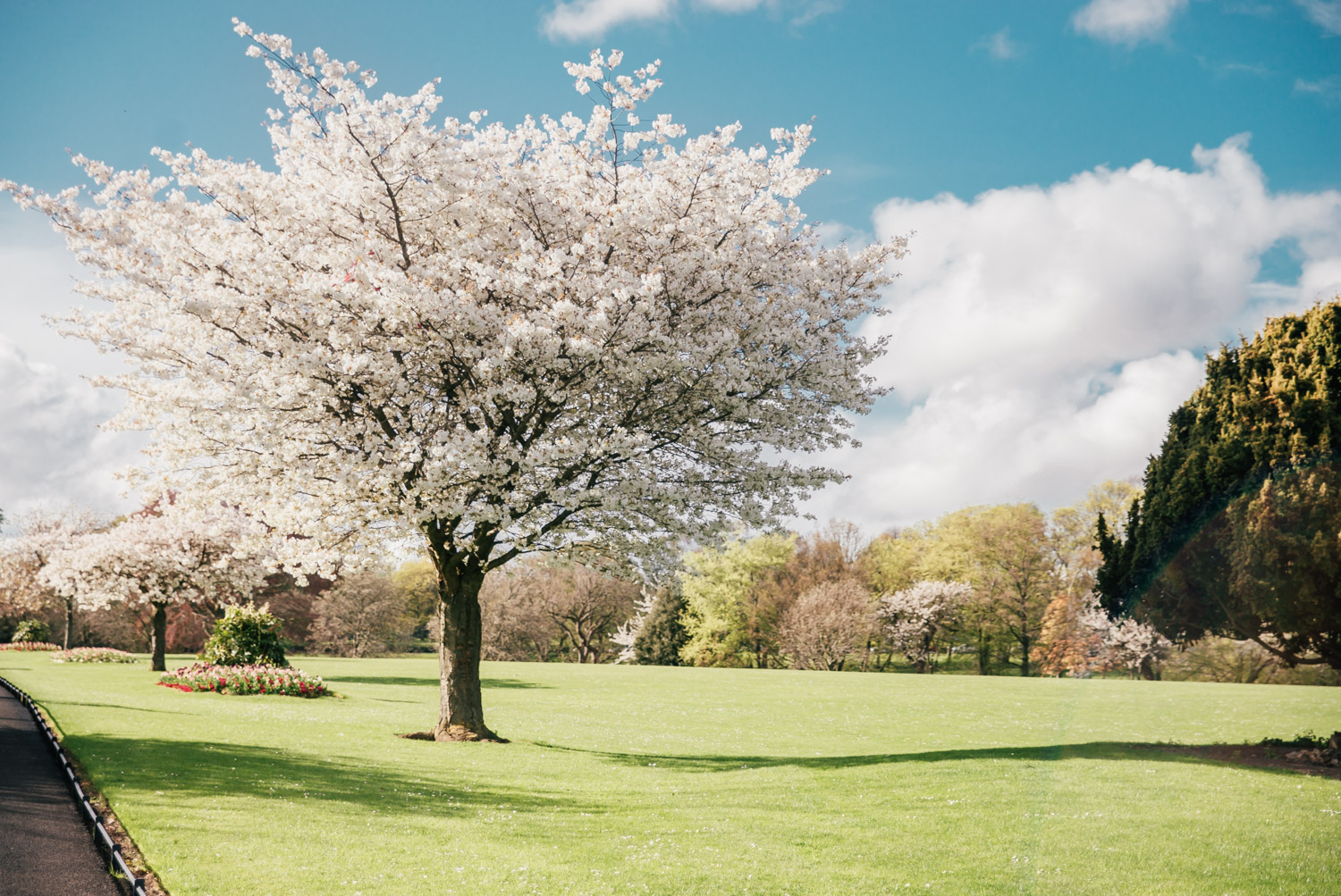 Phoenix Park: The Best Instagram Places in Dublin, Ireland