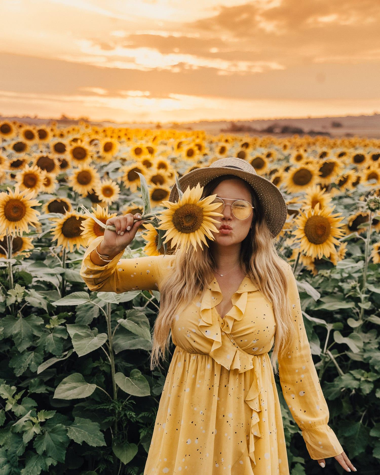 Sunflower field in Karanac | Things to Do in Slavonia, Croatia