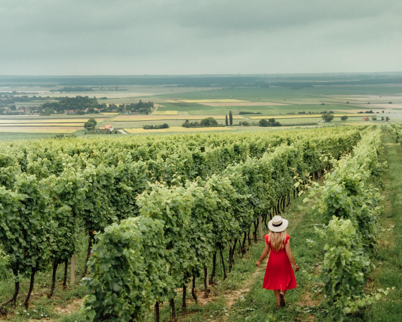 Kneževi Vinogradi Vineyard |Things to Do in Slavonia, Croatia