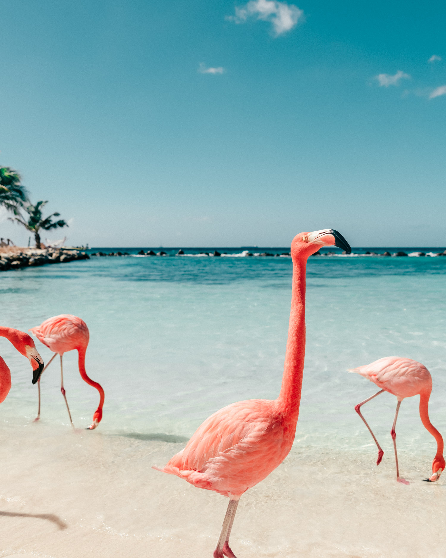 Flamingo Beach, Aruba, Renaissance Private Island
