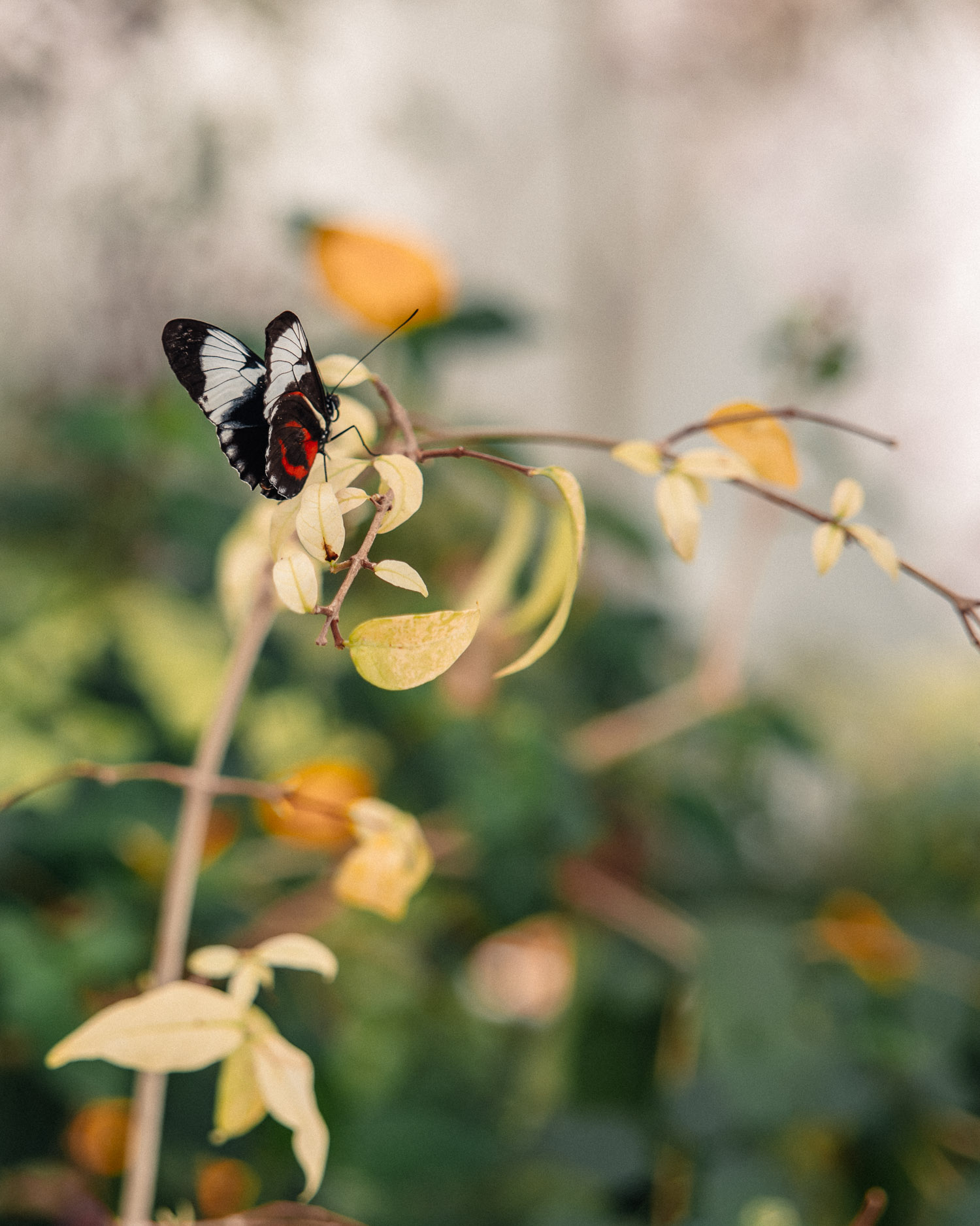 Close-up picture of butterfly at Al Noor Island