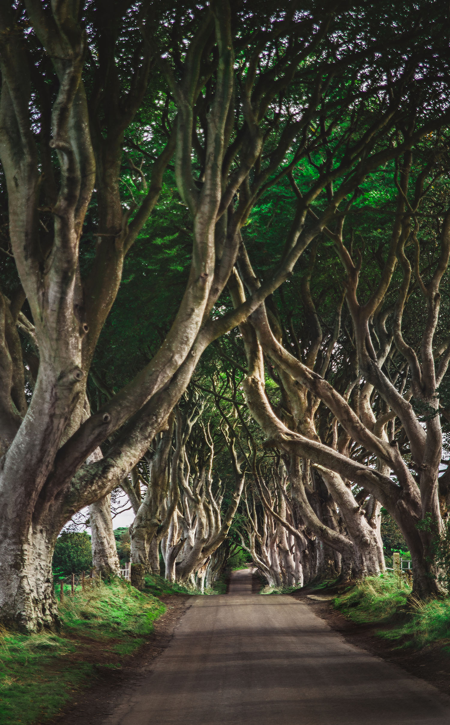 Otroligt vackra Dark Hedges i Nordirland - The Kings Road i Game of Thrones