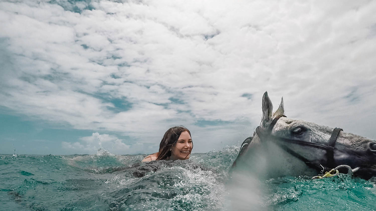 Adaras swimming with horses in Jamaica