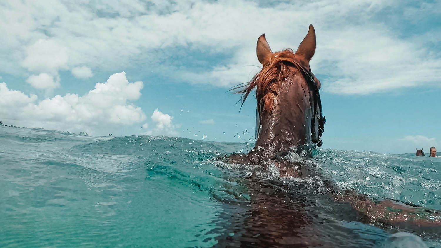 Horse swimming in Caribbean Water - GoPro Hero 6 Photo