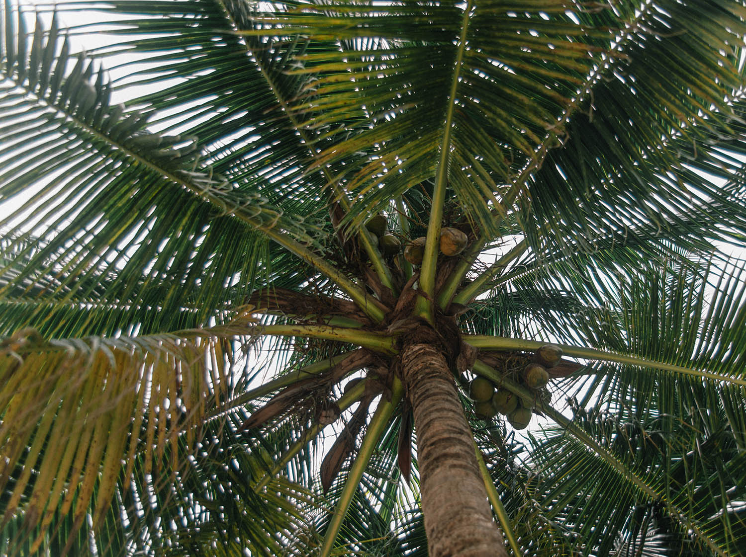 Close-up on palm trees