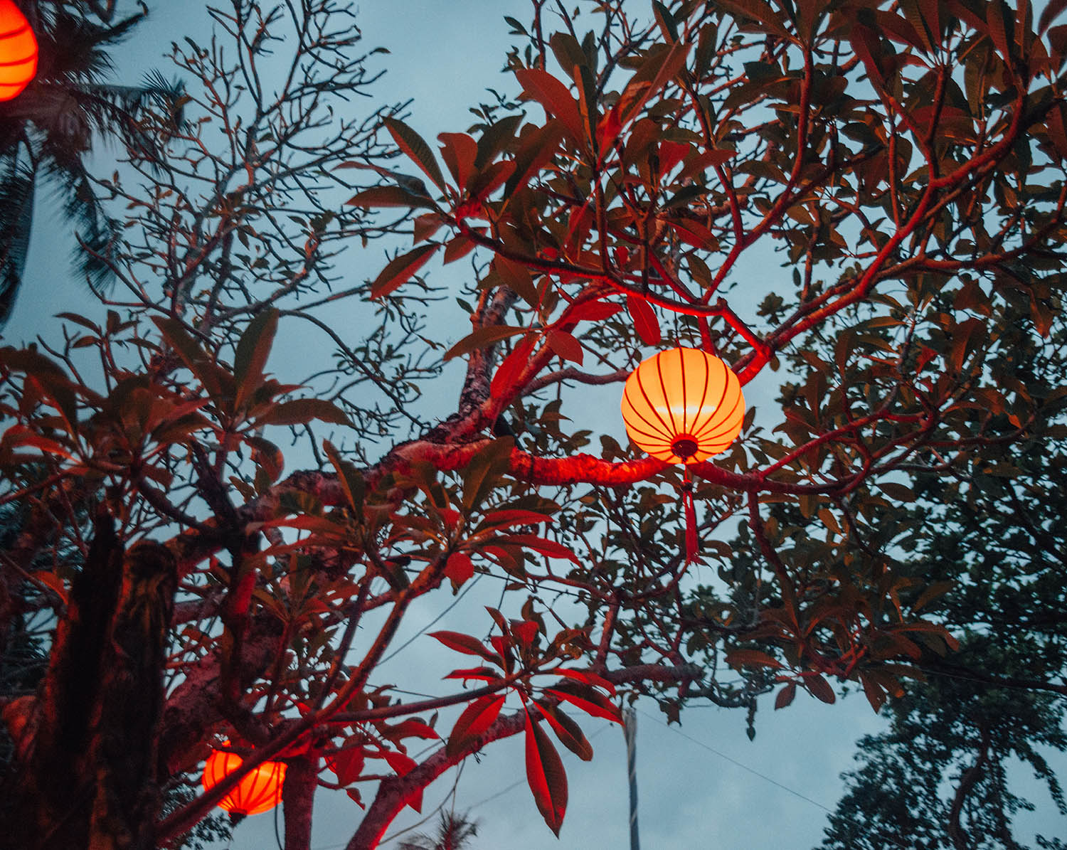 Rice lamp in tree at Binh Quoi Village