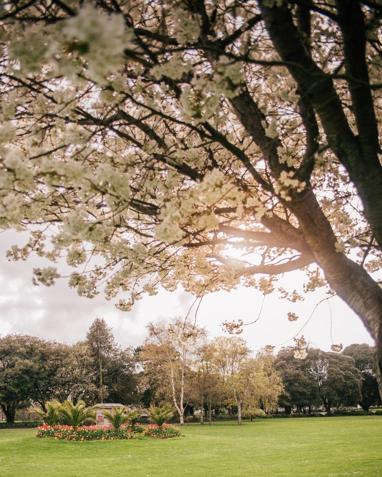 Beautiful Phoenix Park in Dublin, Ireland