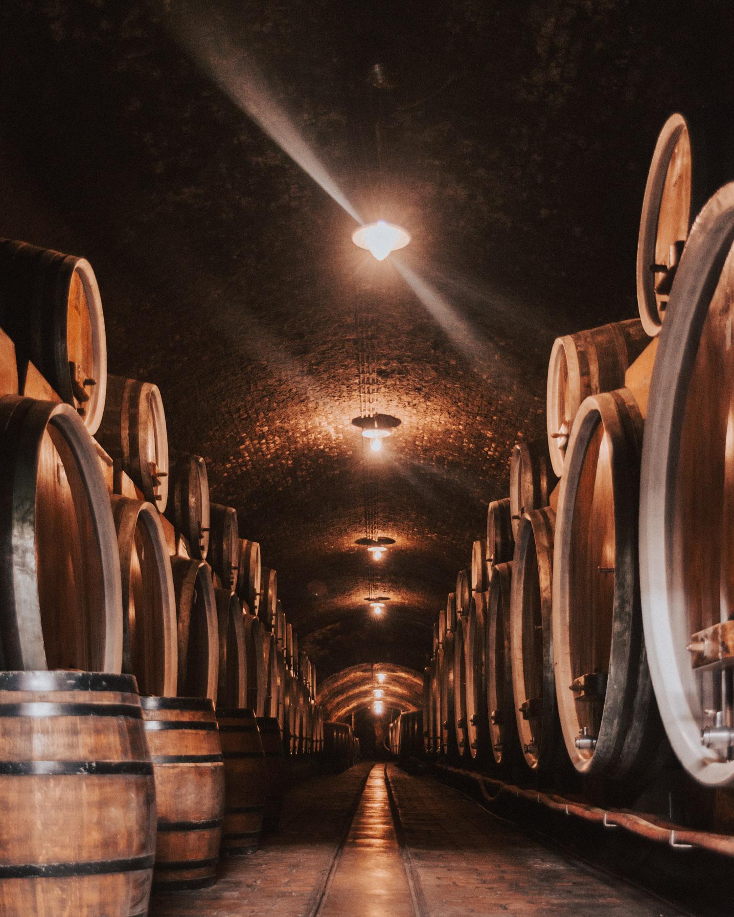 Iločki Podrumi |Wines from the Croatian Danube Wine Region