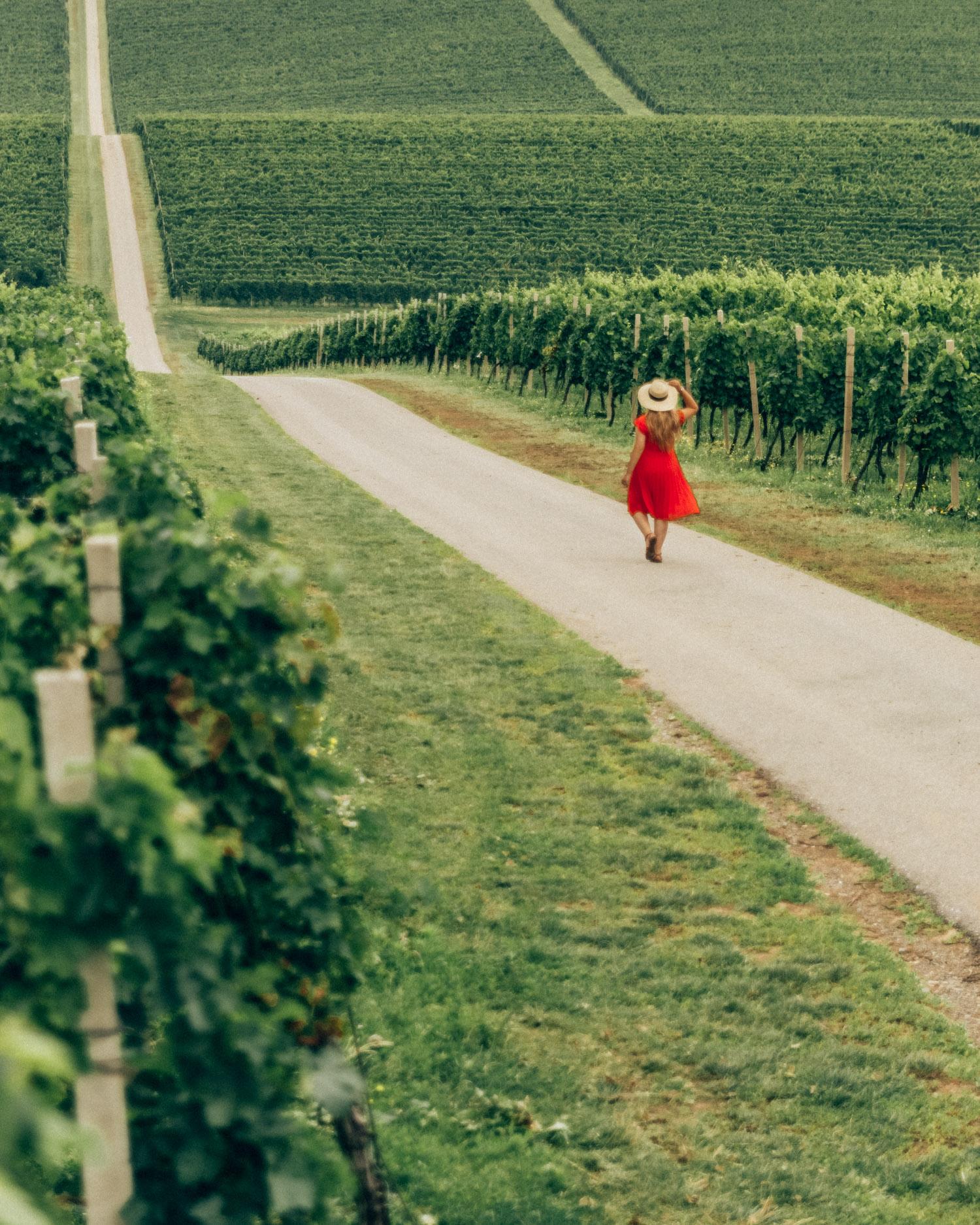 Kneževi Vinogradi Vineyard |Things to Do in Slavonia