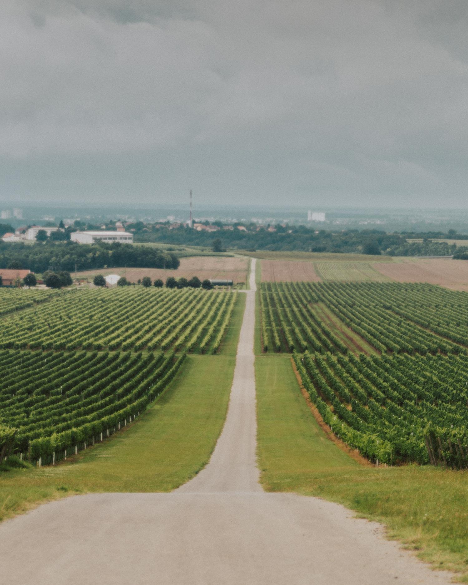 Vineyards in Slavonia