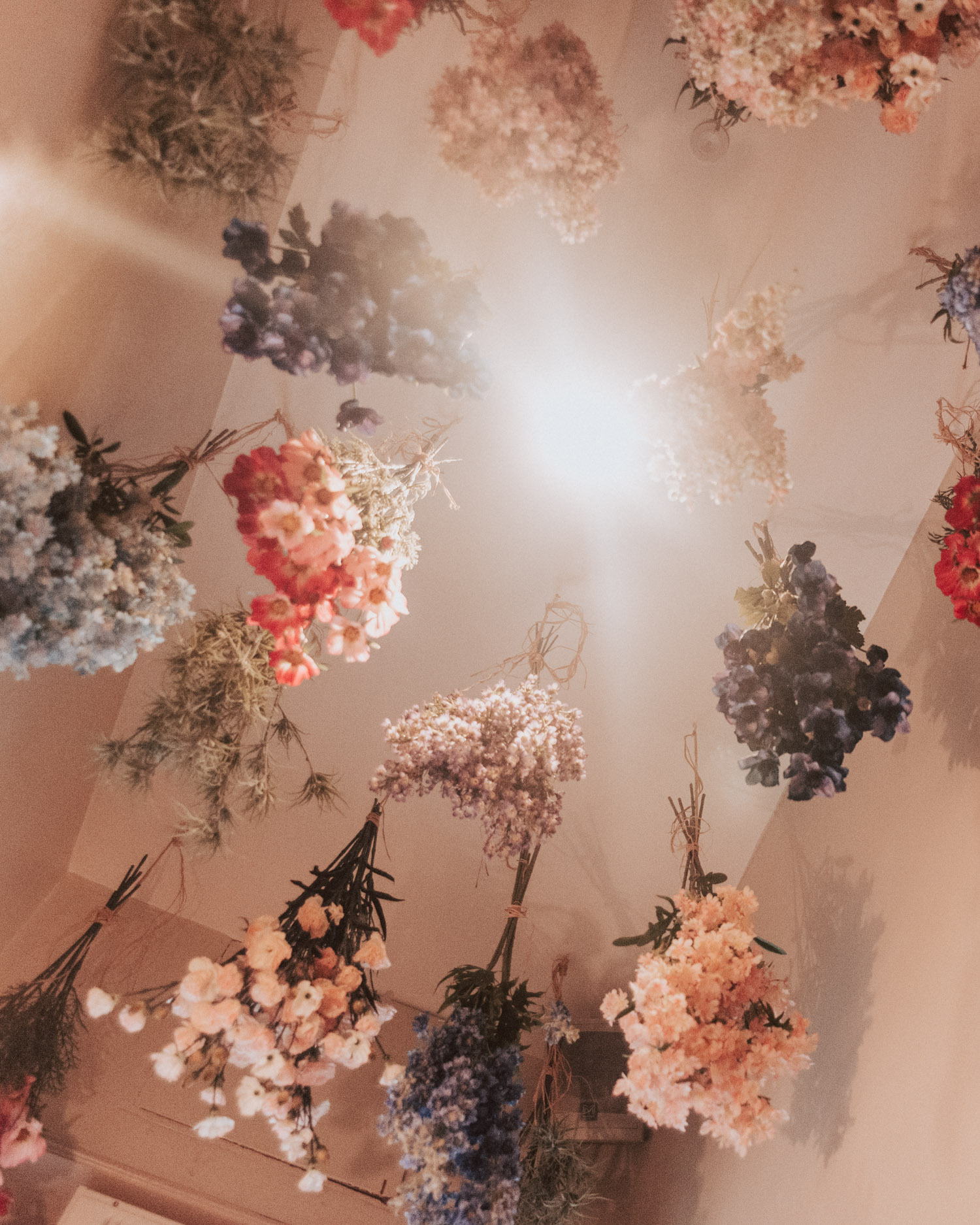 The Florist, Bristol | Dried flowers hanging from ceiling