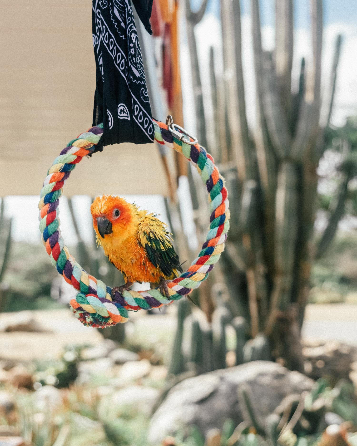 Parrot outside Alto Vista Chapel