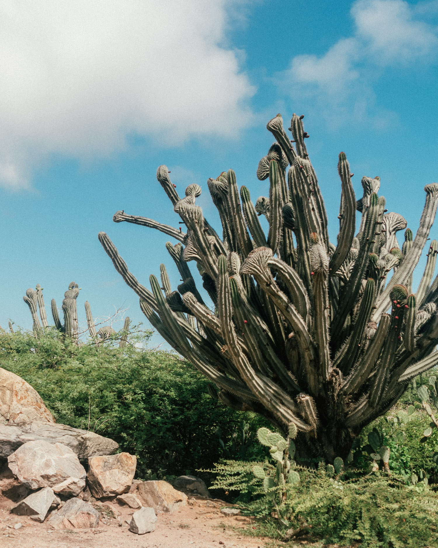 Cactus plants next to Alto Vista Chapel