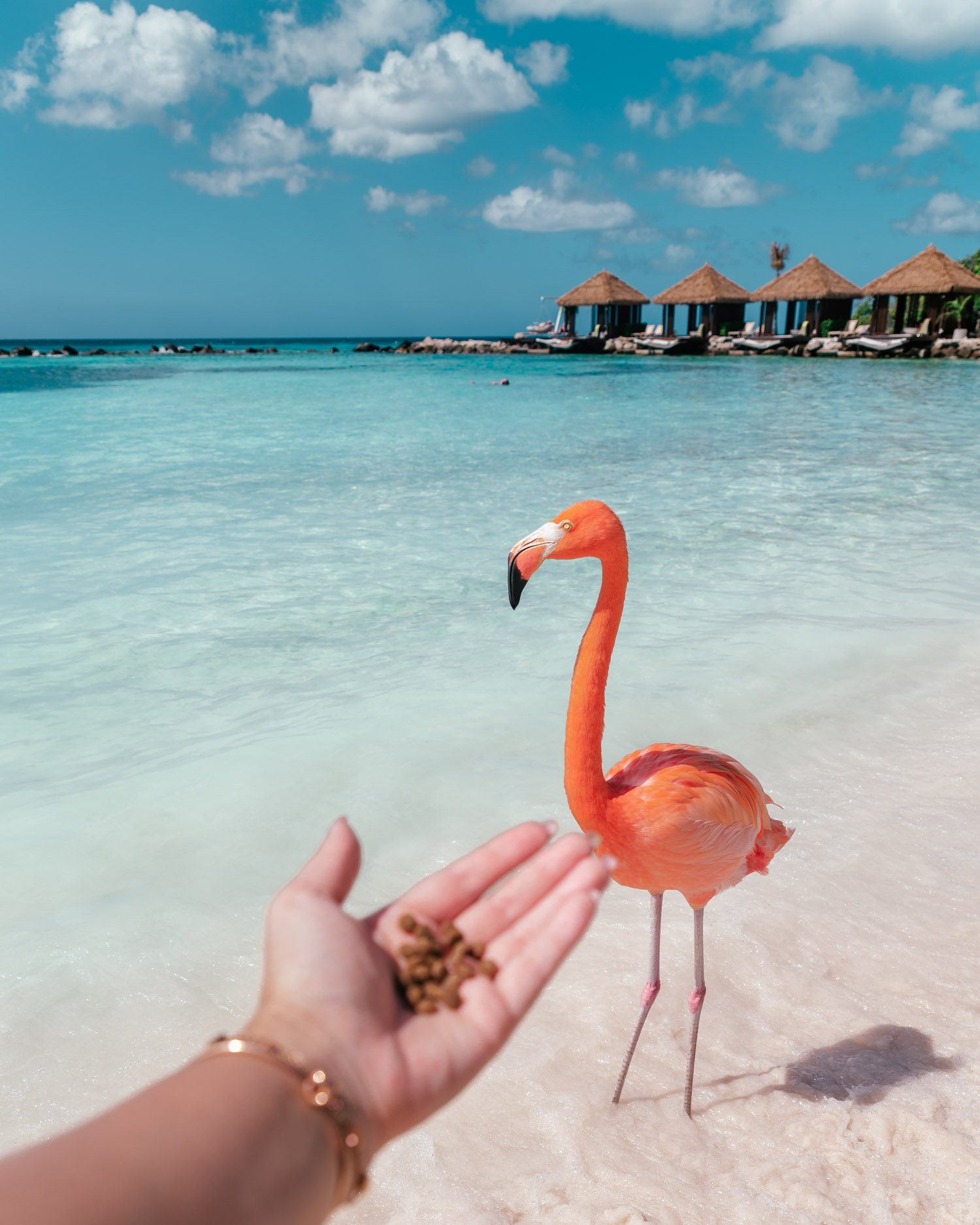 Feeding Flamingos, Renaissance Private Island | The Ultimate Aruba Travel Guide
