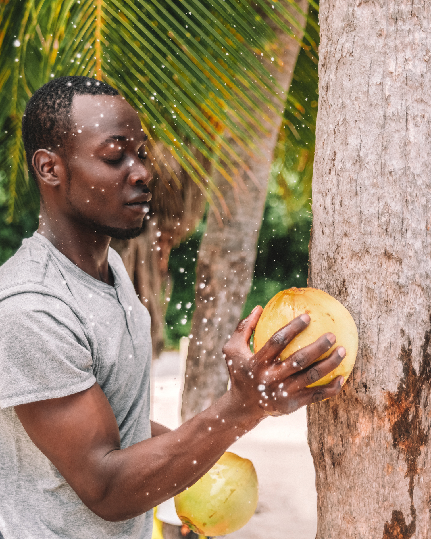 Opening a coconut in Jamaica, Caribbean